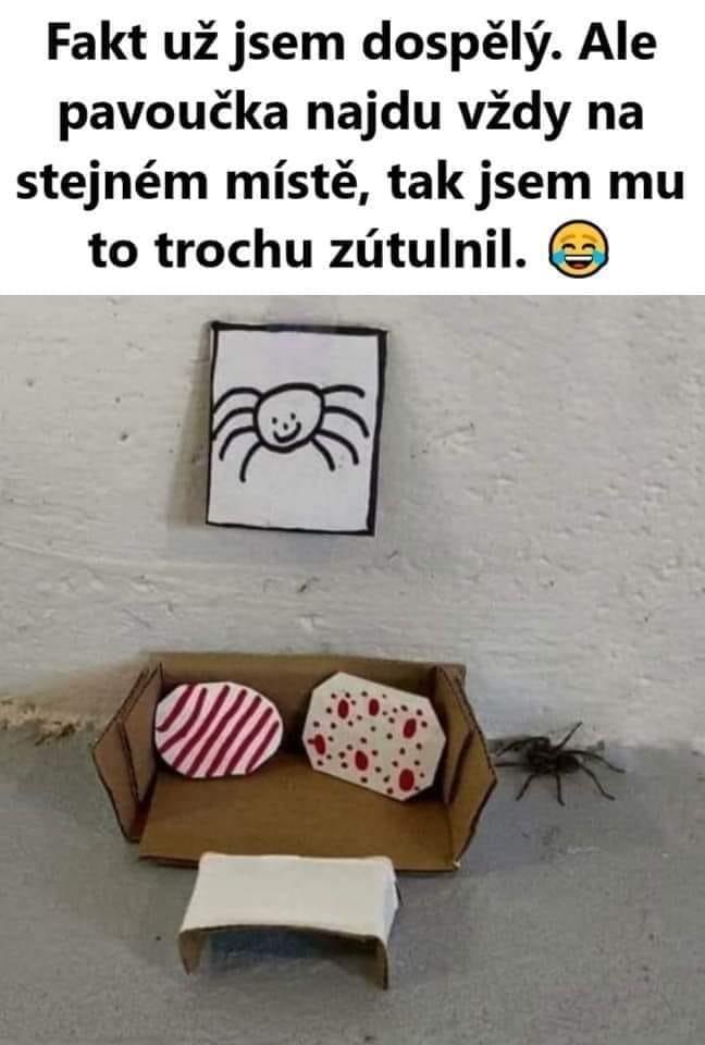 Obrázek faktjsemdospeli-pavoucekmaobyvacek