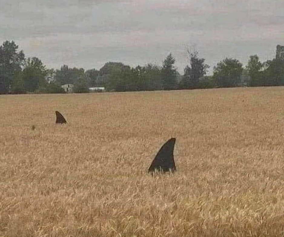 Obrázek fieldsharks
