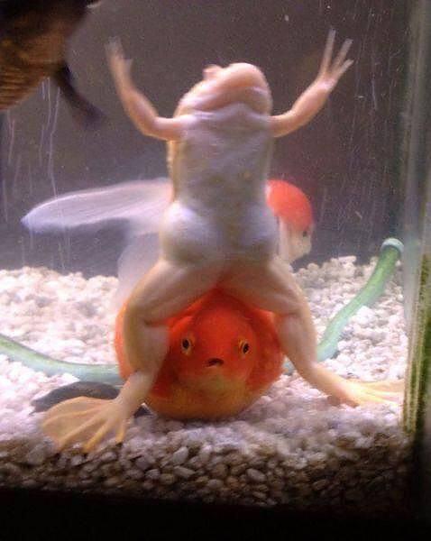 Obrázek fishsex