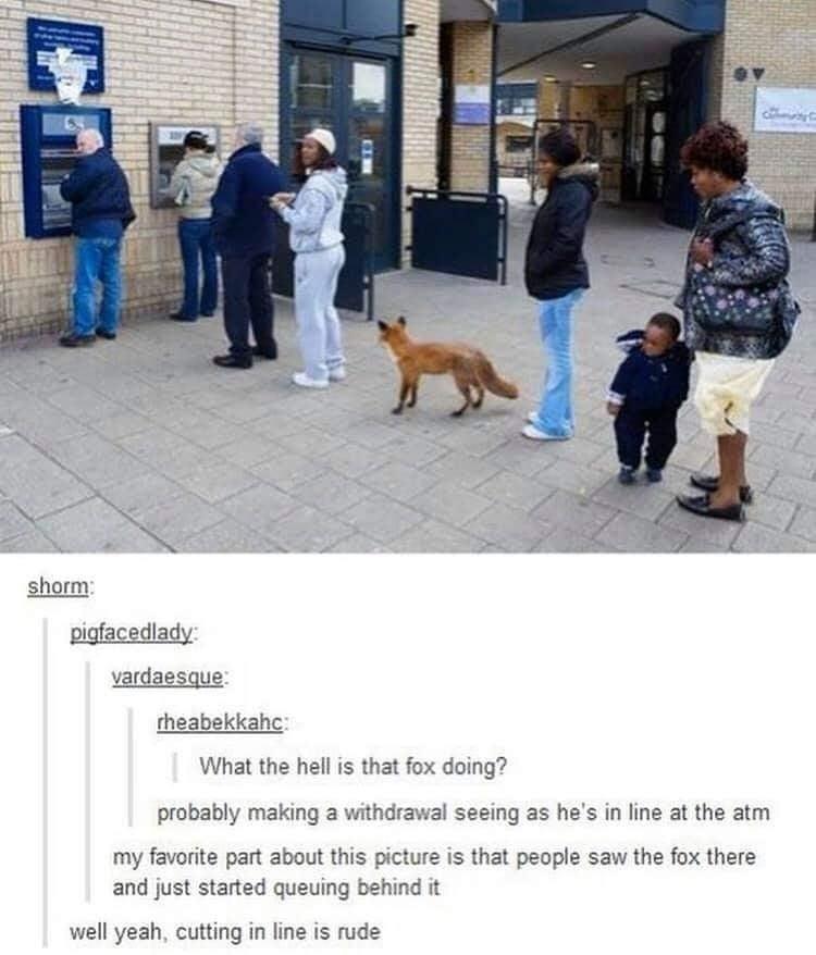 Obrázek foxletanig