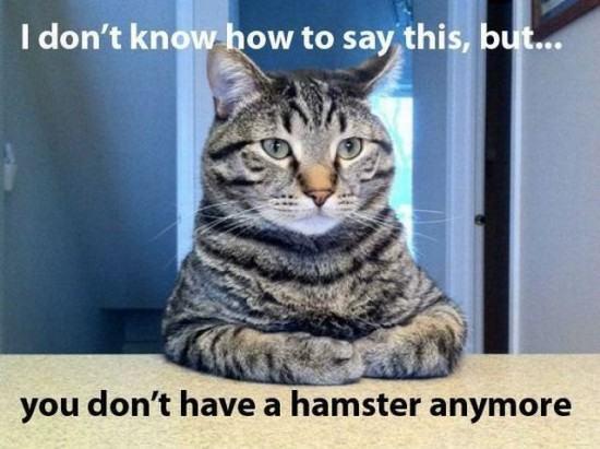 Obrázek hamsters-x