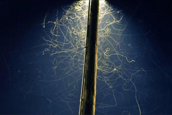 Obrázek hymzpodlampouadlouhaexpozice