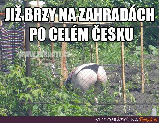 Obrázek jizbrzypepikoprdelakov