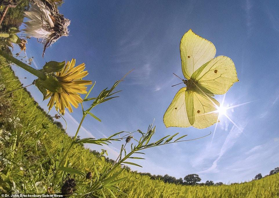 Obrázek motyle03