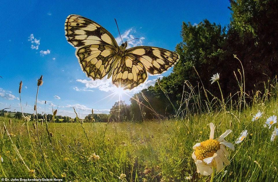 Obrázek motyle04