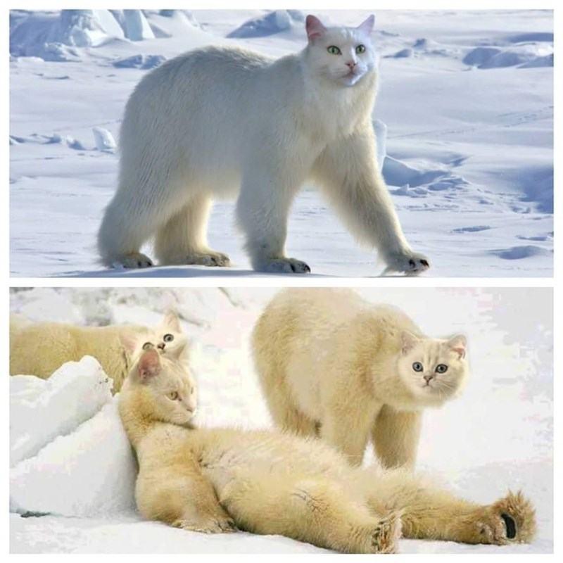 Obrázek polarnimacik