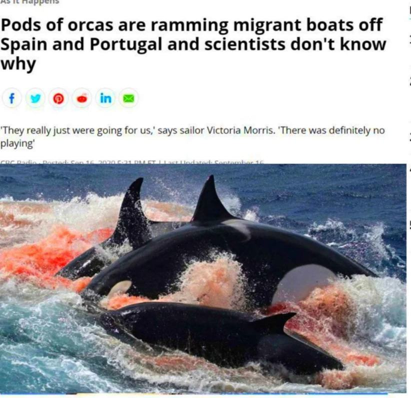 Obrázek save the whales and whales save you