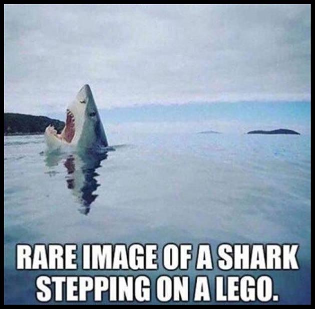 Obrázek shark-lego