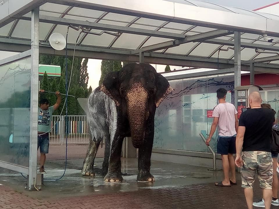 Obrázek slonvmicce