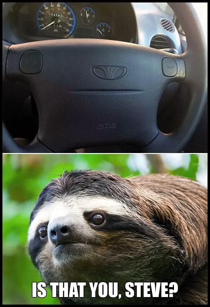 Obrázek sloth-steve
