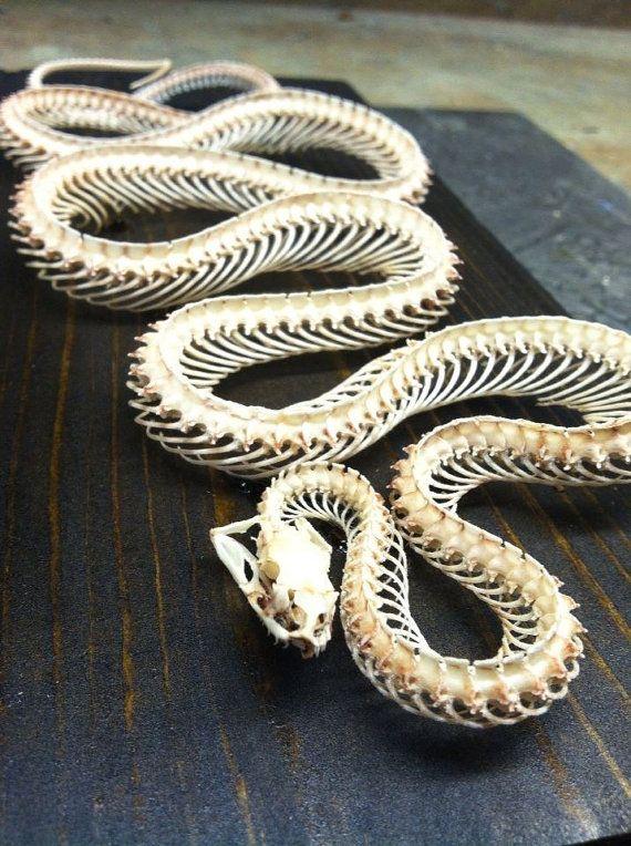 Obrázek snakeskeleton