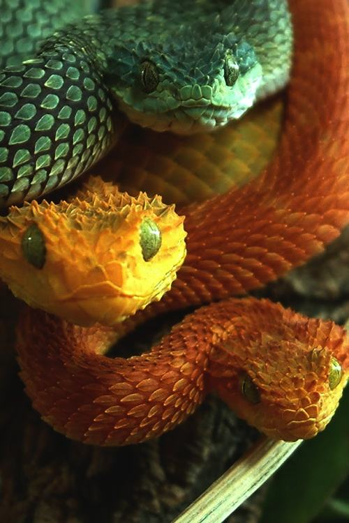 Obrázek snakes