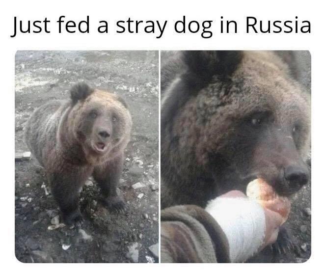 Obrázek strayrussiandog