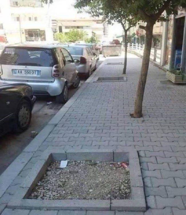 Obrázek treesinpavement
