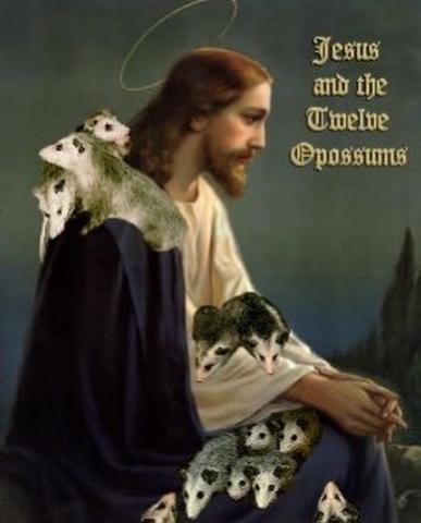 Obrázek twelve-opossums