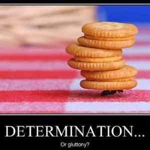 Obrázek '-Determination-05.12.2012'
