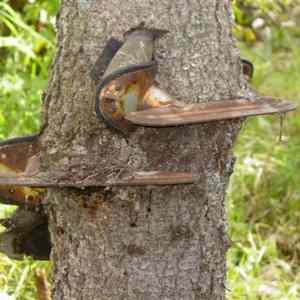 Obrázek '-BruceeLeevs.strom-'