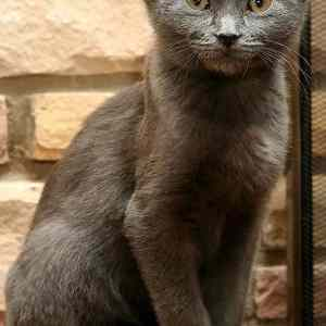 Obrázek '-yoda-cat-with-four-ears-'