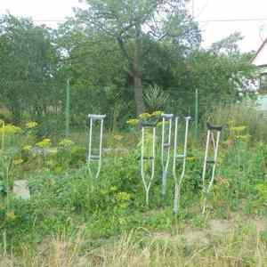 Obrázek '-zahradkakderostoumrzaci-'