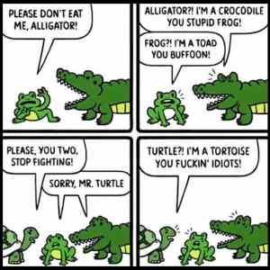 Obrázek '-alligator-'