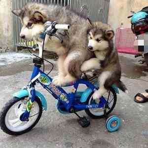 Obrázek '-cycling-'