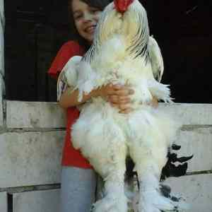 Obrázek 'A girl with a giant cock presne podle pravidel roumingu'