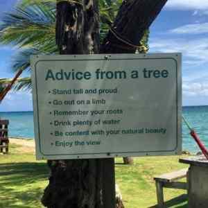 Obrázek 'AdviceFromATree'