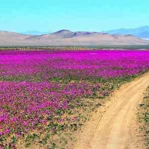 Obrázek 'Atacamanenipoust'