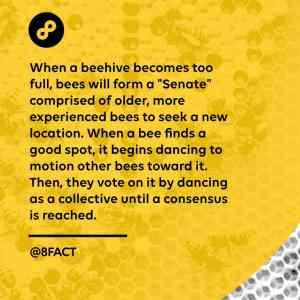 Obrázek 'Beesenate'
