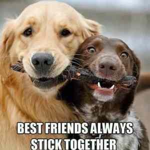 Obrázek 'BestFriendsAlways'