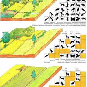 Obrázek 'Biodiverzita'