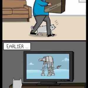 Obrázek 'Cats-are-assholes'