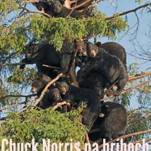 Obrázek 'Chuck'