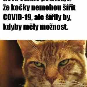 Obrázek 'Crazypussy'