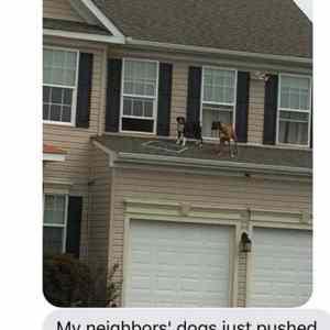 Obrázek 'DogPartyOnTheRoof'