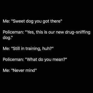 Obrázek 'Dogintraining'