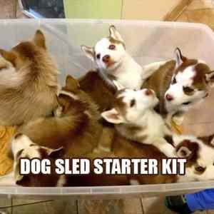 Obrázek 'Dogsledstarter'