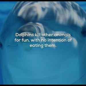 Obrázek 'DolphinsKill'