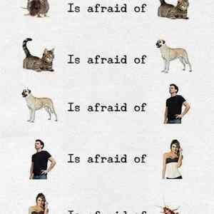 Obrázek 'Fears'