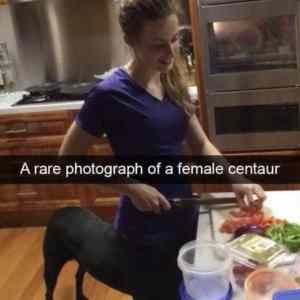 Obrázek 'Femalecentaur'