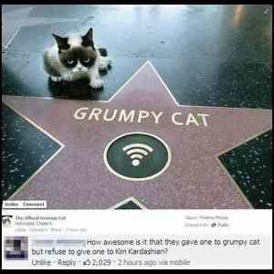Obrázek 'Grumpy-cat-is-here'