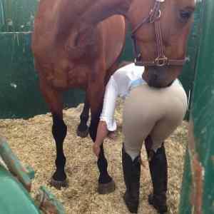 Obrázek 'Horse-DatASS'