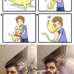 Obrázek 'Just-a-cat'
