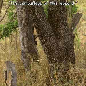 Obrázek 'LeopardCamouflage'