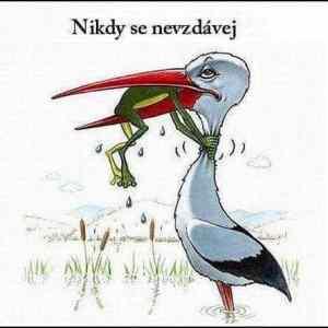 Obrázek 'NeverGiveUp'