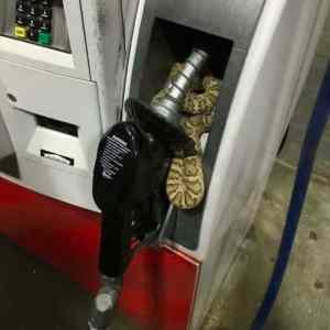 Obrázek 'Okay-IthinkIcanmakeittothenextgasstation'
