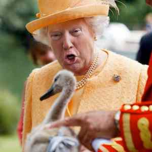 Obrázek 'QueenTrumpIV'
