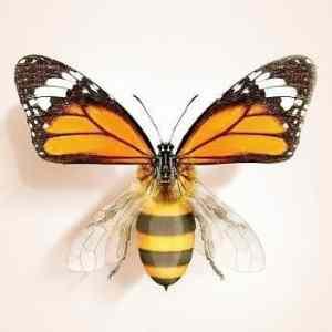 Obrázek 'RepkomutantVcelo-motyle'