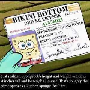 Obrázek 'SpongebOb'