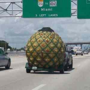 Obrázek 'Spongebobevacuatedaswell'
